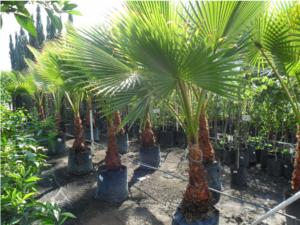 Proyecto de Inversión en cultivo de palmas